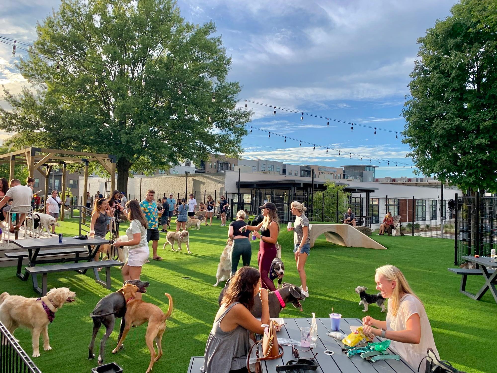 charlotte dog bar and park