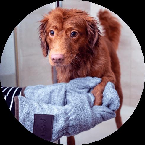 self serve dog wash
