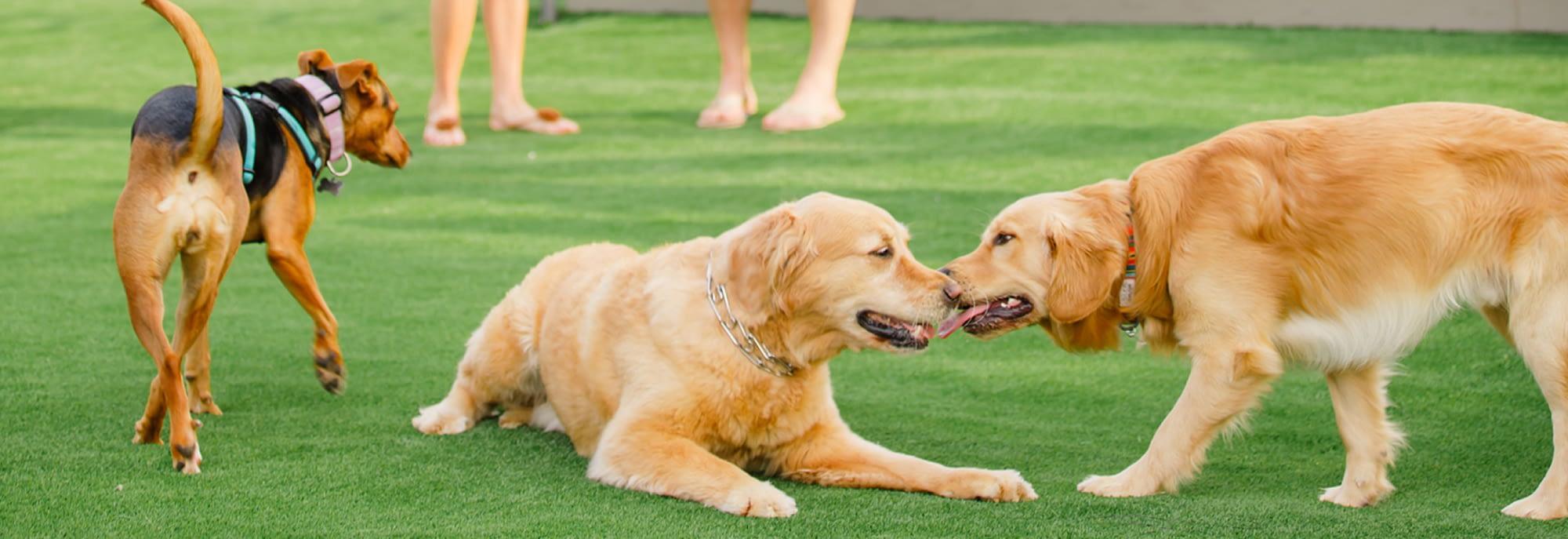 charlotte dog daycare